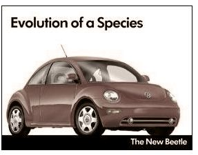 Evolution of a Species - The New Beetle